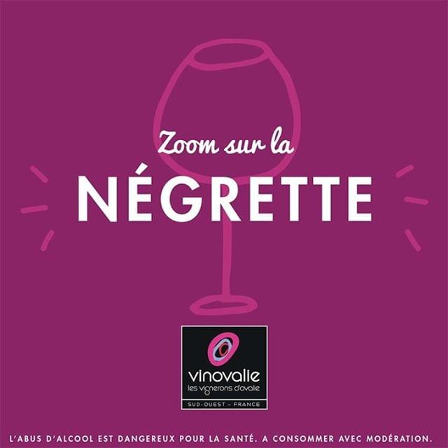 🍇 LA NÉGRETTE 🍇⠀ ⠀ 🧐 Connaissez vous ce cépage star des vignes du frontonnais ?⠀ ⠀ Un cépage autochtone cultivé 🌱aux portes de Toulouse et nulle part ailleurs... que vous retrouvez notamment dans nos cuvées Vignoble Soulédré, Astrolabe Negrette ou Inès 🍷!⠀ ⠀ On vous dit tout 👉 https://buff.ly/2YctQWc⠀ ⠀ #vinovalie #negrette #vignoblesouledre #souledre #aopfronton #ines #wien #wienaddict #winelover #winemaker #ccoperative #cepage @vinsdefronton #lesvinsdusudouest @lesvinsdusudouest